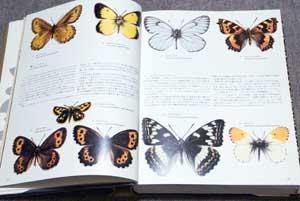 「美しいナイン」9種の高山蝶の紹介