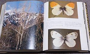 クモマツマキチョウ。高山の妖精。左は上高地