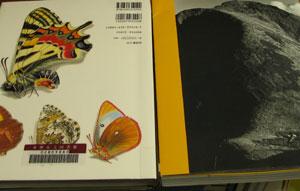 左:書籍、右:図録