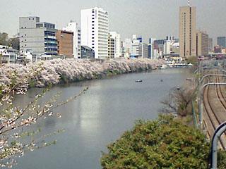市ヶ谷のお堀の桜 4月4日