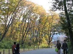 黄葉の多摩動物公園