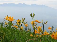 八ヶ岳とニッコウキスゲ